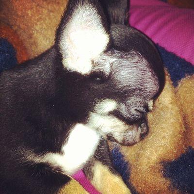 Louie sleeping