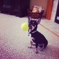 Louie ball