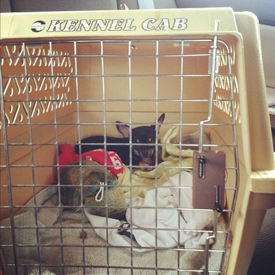 Bringing puppy home