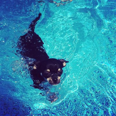 Louie swimming