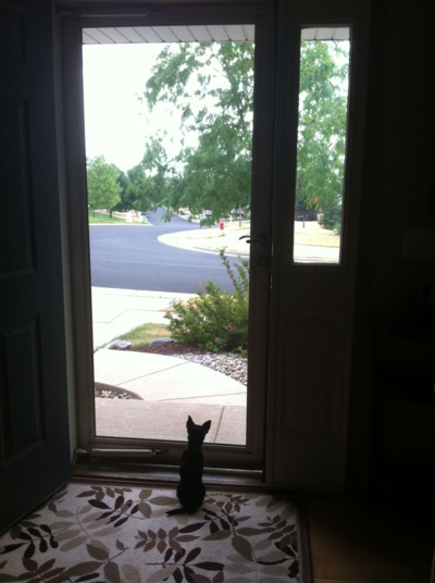 Louie door