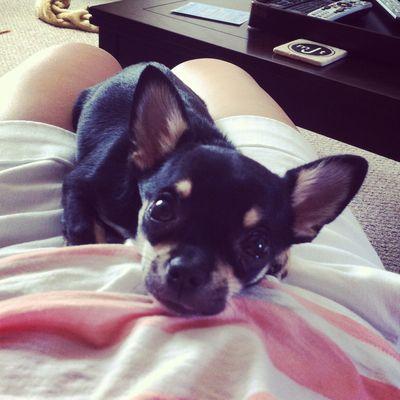 Louie please