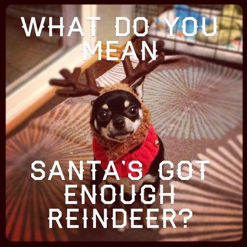 Louie reindeer